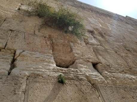 Israel, Efrat Malachi 🇮🇱